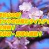 加護坊山の桜2019桜まつりの日程とライトアップ・屋台情報!開花状況・見頃も確認!