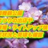 福岡舞鶴公園桜まつり2019/出店や駐車場・ライトアップ情報!開花状況と見頃も確認