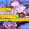 岩倉桜まつり2019/駐車場や屋台情報!ライトアップ時間と場所も確認!