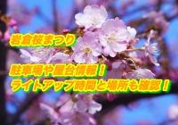 岩倉桜まつり2020駐車場や屋台情報!ライトアップ時間と場所も確認!