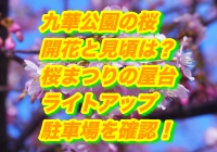 九華公園の桜2019/開花と見頃は?桜まつりの屋台とライトアップ・駐車場を確認!