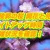 五稜郭の桜2019/開花と見頃は?ライトアップ時間と混雑状況を確認!