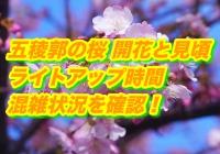 五稜郭の桜2020開花と見頃は?ライトアップ時間と混雑状況を確認!