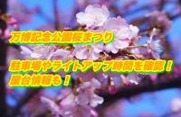万博記念公園桜まつり2020駐車場やライトアップ時間を確認!屋台情報も!