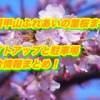 世羅甲山ふれあいの里桜まつり2019!ライトアップと駐車場・屋台情報まとめ!