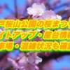 水戸桜山公園の桜まつりとライトアップ・屋台情報2019!駐車場・混雑状況も確認!