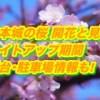 松本城の桜2019開花と見頃!ライトアップ期間と屋台・駐車場情報も!