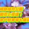 萩城跡指月公園の桜2019開花と見頃!料金や駐車場も確認!
