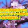 高遠城址公園の桜(まつり)2019見頃とライトアップ時間を確認!混雑・駐車場情報も!