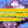 大寧寺の桜2019開花と見頃!ライトアップと駐車場や混雑情報まとめ!