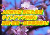 上田城の桜2020開花と見頃!ライトアップ時間と混雑・屋台・駐車場情報も!