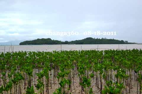 The 36.5 acre island of Kawit off the shores of Sibobo, Calabanga.