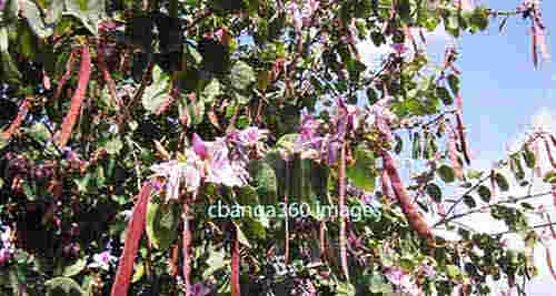 2015_0412_butterflyflower267