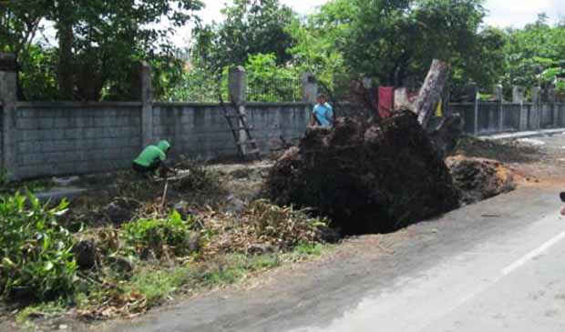 2016_0219_albay-tree-cutting3