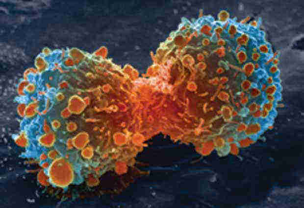 2016_0225_lung-cancer-cell-division