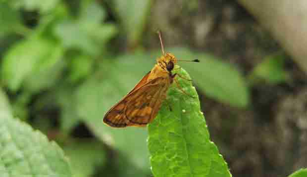 2016_0603_butterfly