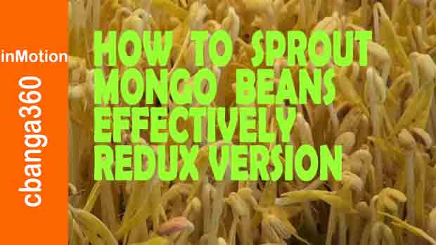 Watch How to Effectively Sprout Mongo Beans Redux Version 2018