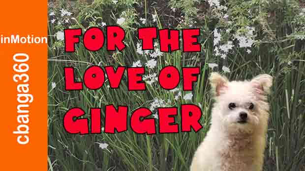 Watch Ginger goes to heaven in springtime