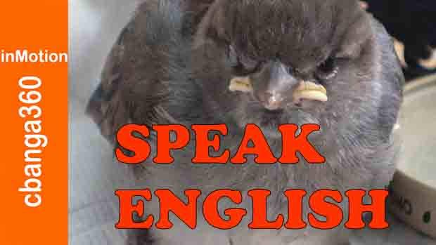 Watch Yes Speak English Please
