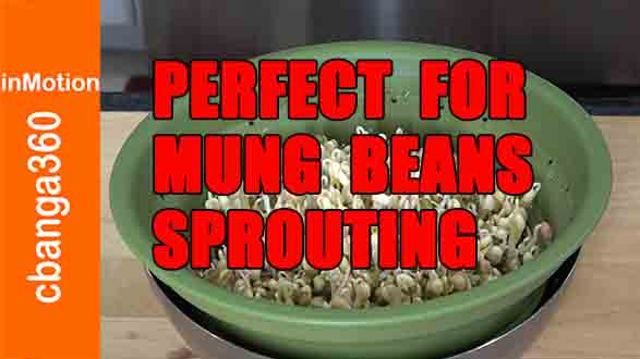 WATCH: Found perfect container for sprouting mung beans