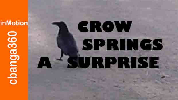 A Crow Springs April Surprise