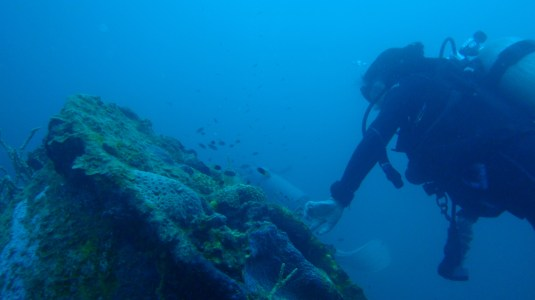 Up close with a WWII shipwreck