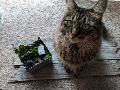 cat with cbd