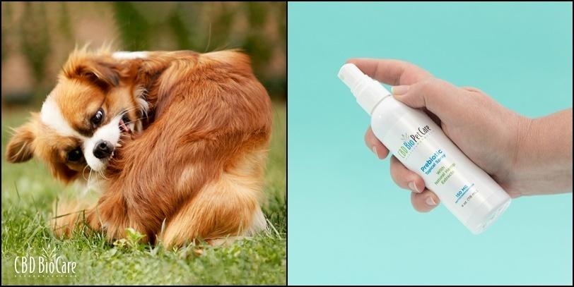 cbd pet spray for hot spots