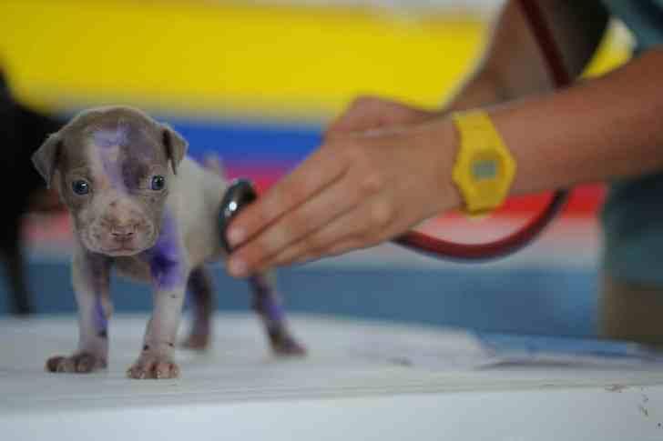 CBD Dog Health Veterinarian