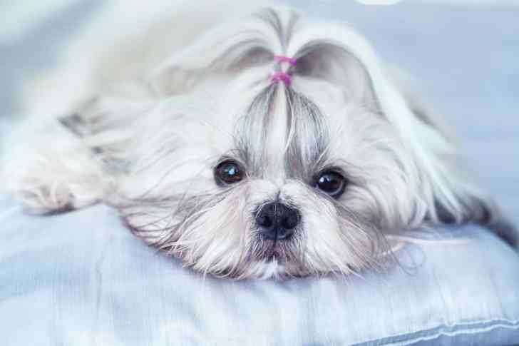 CBD Dog Health Sick Dog