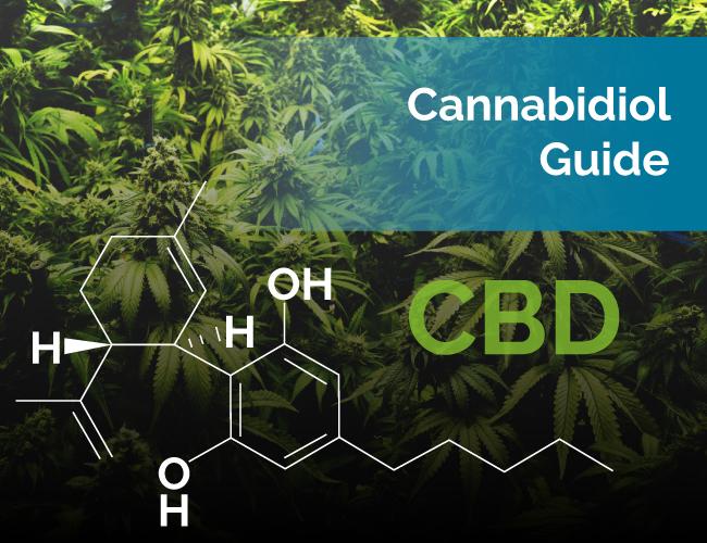 cbd cannabidiol - GREEN LABEL 15G ORAL APPLICATOR