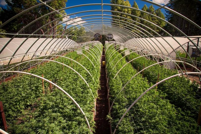 california legalization