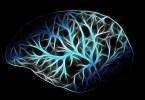 THC Brain