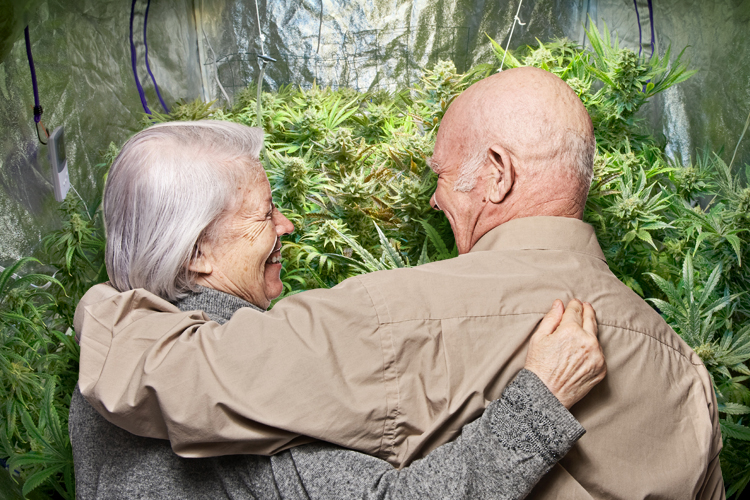 CBD & Cannabis