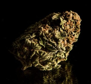 Best high-CBD hemp flowers