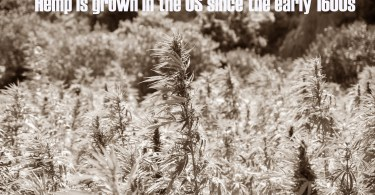 Hemp is grown in the US since the early 1600s