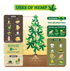 hemp's popularity