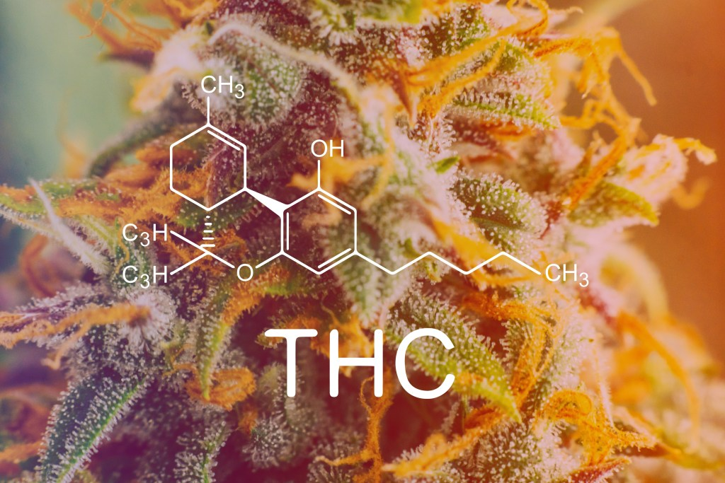 Study Shows That THC Benefits Are Greater Than CBD's