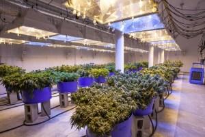 IoT cannabis