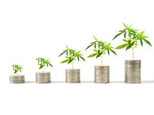 cannabis israel export