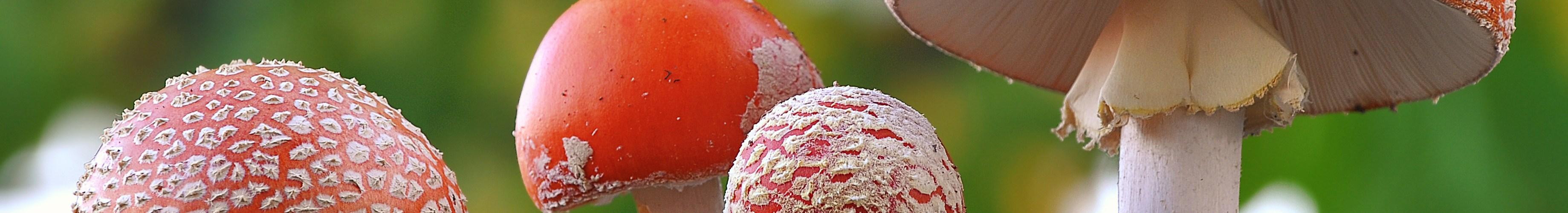 denver mushrooms