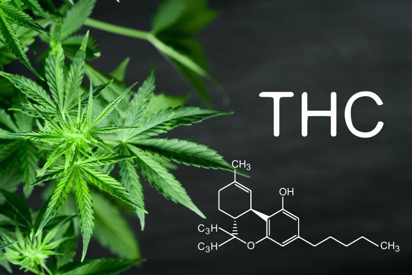 cannabis potency