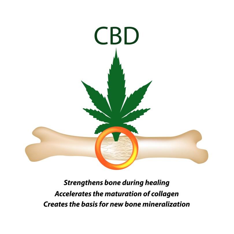 cannabis bones