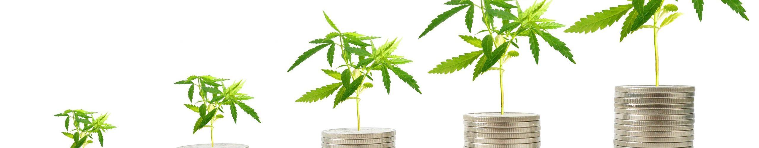 investment cannabis hemp