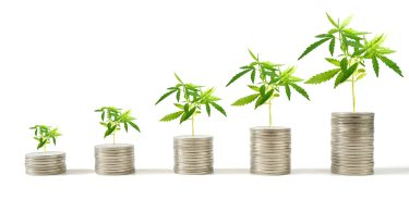 investment cannabis hemp
