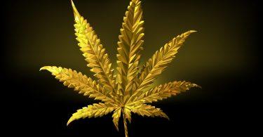 cannabis gold