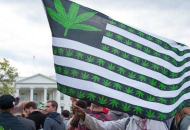 cannabis trump biden