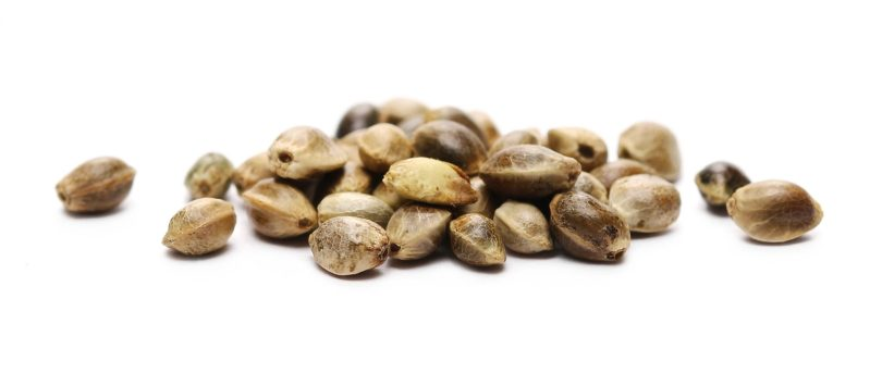 CanBreed Seeds