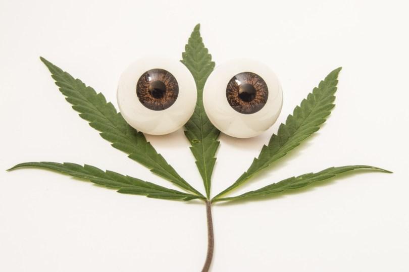 glaucoma and cannabis