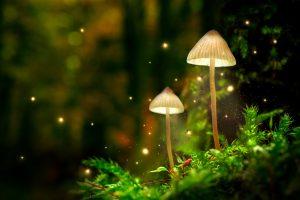 Florida legalize magic mushrooms